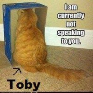 Toby Regbo: cosa pensa? Sui social, qualcuno ha raffigurato Regbo, come un gatto, che si rifiuta di parlare con noi.