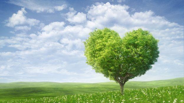 Adottare: quando un semplice gesto può aiutare la natura