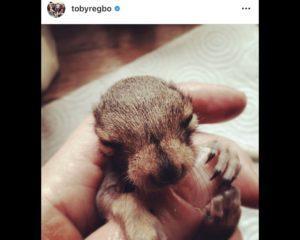 Toby Regbo: DIAH2 giugno 2020. Toby Regbo - Squirrel's got bristles. (Instagram - 2014)